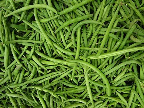 114 g Seeds of Phaseolus vulgaris, Romano 14 Bush Snap Bean, Bulk Size: 1/4 lb