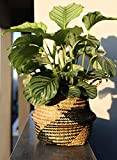 LE TAUCI Medium Plant Basket with Liner, Indoor