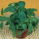 Semente de Manjericão Alfavaca Verde - Embalagem 150mg