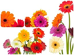 Flowers for Delivery-Gerbera Daisies Ranbow (25 Stems) Hand-tied Bouquet- No Vase