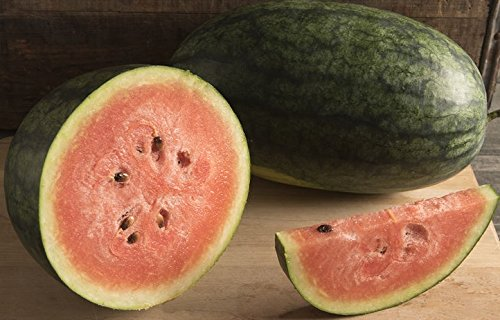 David's Garden Seeds Fruit Watermelon Dark Belle S3766Q (Red) 25 Hybrid Seeds