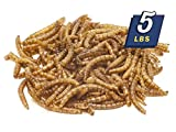 MBTP Bulk Dried Mealworms - Treats for Chickens...