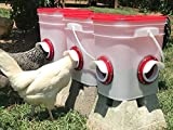 RentACoop Chicken Feeder-Holds 20