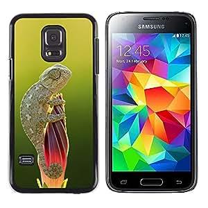 Be Good Phone Accessory // Dura Cáscara cubierta Protectora Caso Carcasa Funda de Protección para Samsung Galaxy S5 Mini, SM-G800, NOT S5 REGULAR! // cute lizard chameleon green nat