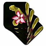 3dRose Desert-rose, Adenium obesum, South