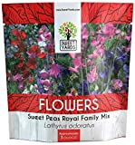 Sweet Pea Seeds Royal Mix - Bulk 1 Ounce Packet - Over 350 Seeds - Large Fragrant Lavender, Purple, Red, Pink and White Blooms