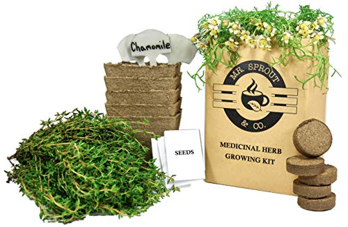 Mr. Sprout Herbal Remedies Kit: Seed Starter Kit - Easily Grow 5 Medicinal Herbs with Indoor Herb Garden Kit (Chamomile, Echinacea, Catnip, Sage & Thyme) | Natural Homeopathic Remedies
