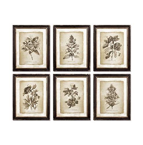 - Botanical Prints Wall Art Prints Framed Wall Art for Living Room Wall Decorations, Rustic Wall Decor, Bedroom Kitchen Wall Decor, Pictures for Bedroom Set 6 Vintage Botanical Illustration Style