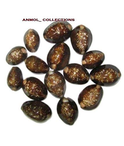 rare-black-kauri-kaudi-kawdi-shell-goddess-lakshmi-blessing-puja-lot-of-11-pieces
