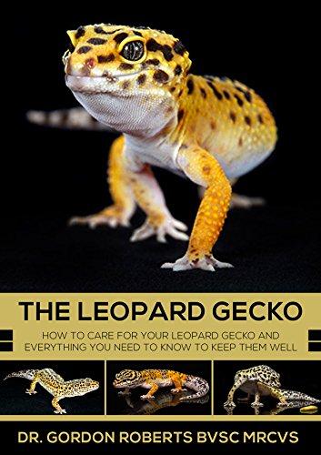 Gecko ebook leopard