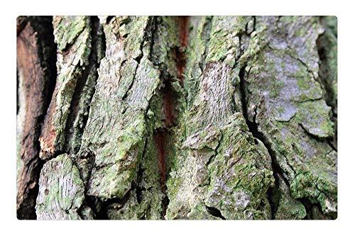 Indoor Floor Rug/Mat (23.6 x 15.7 Inch) - Tree Bark Bark Tree Trunk Textured Green Tinge