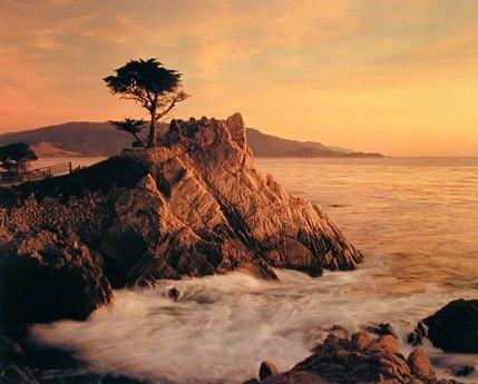 Ocean Scenery Wall Decor Picture Lone Cypress Tree Pebble Beach Art Print Poster (16x20)