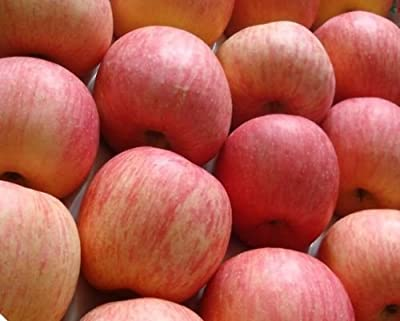 Apple Seeds- RED FUJI -Sweet Variety - Nutritious & Delicious - 10 Organic Seeds