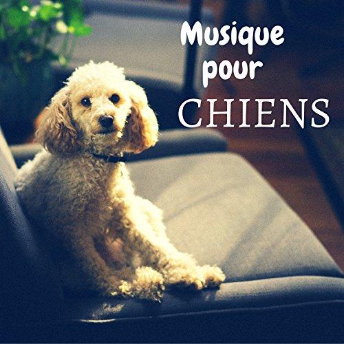 musique relaxation pour chien