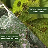 Bayer Advanced 100531789 3-in-1 Insect Disease
