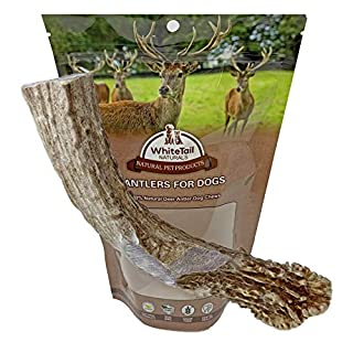 WhiteTail Naturals | Premium Deer Antler for Dogs | (XXL, XL, L) | All Natural Organic Antler Chew | USA Dog Chews for Big Breeds | Long Lasting