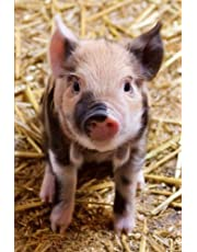 """Pig Journal: (Piglet Journal, Pig Notebook, Log Book, Diary, School Composition Book, Creative Writing, Poetry, 6 x 9"""", Medium, Ruled)"""