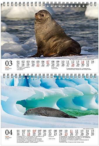 Robbenzauber DIN A5 Tischkalender für 2021 Robben und Seelöwen - Geschenkset Inhalt: 1x Kalender, 1x Weihnachts- und 1x Grußkarte (insgesamt 3 Teile)