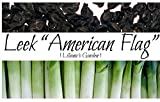 Leek Seeds - American Flag - Heirloom - Liliana's Garden