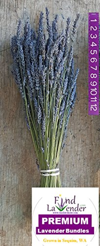 Findlavender - Lavender Dried Premium Bundles - 22 to 24' Guaranteed! - 130 to 150 Stems - Can Be Used for Any Ocassion - Perfect for your wedding! - 1 Bundle Pack