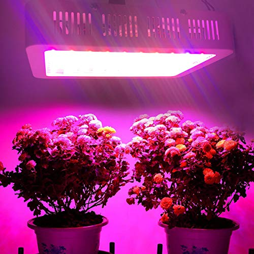 LED Grow Lights 1000W Double Chips Full Spectrum with 4 Years Local Warranty Perfect for Greenhouse Hydroponic Indoor Plants Veg and Flower All Phases of Plant Growth by Anordsem by Anordsem (Image #5)