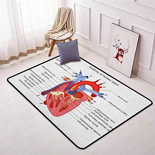 (Educational Children's Bedroom Carpet Medical Structure of The Hearts Human Body Anatomy Organ Veins Cardiology Soft Fluffy W35.4 x L47.2 Inch Coral Red Blue)