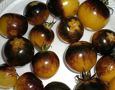 Potomac Small Banks Bumble Bee Heirloom Tomato Seeds, 25 Count