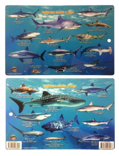 Caribbean Shark Identification Card 8.5 in by 5.5 in by FrankosMaps