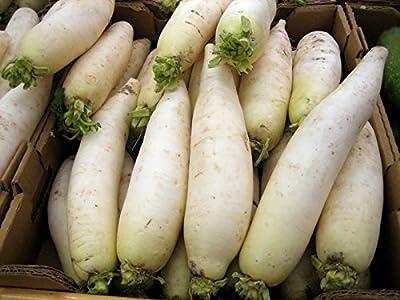 Giant Daikon Radish (75 seeds) forage plot bulk fertilizer