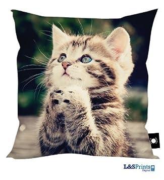 Amazon.com: Rezando diseño de gato cojín perfecta Idea de ...