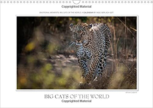 big cats revised edition