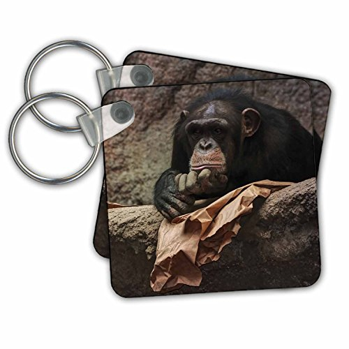 Zoo Animal Keychain - 5