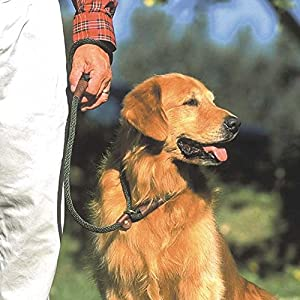 "Mendota Pet Dog Slip Lead, 3/8"" x 6', Black"