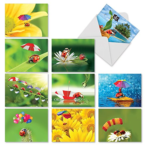 Assortment of 10 Ladybug-Themed Blank Greeting Cards - Boxed Greeting Card 4 x 5.12 inch Set with Envelopes - 'Lady B.' Stationery Set for Any Occasion M1546BN