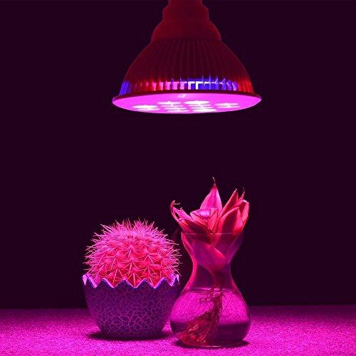 Hydroponic LED Plant Grow Lights Bulbs , DLAND 12W, 12 LEDs, 3 Blue/9 Red Perfect Grow Lights for Hydroponic Garden Greenhouses Plants,Indoor Flowers, Vegetables, Garden Lighting
