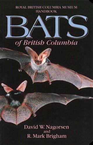 001 Bat - 3