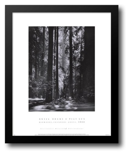 Redwoods, Founders Grove 20x24 Framed Art Print by Adams, (Redwoods Founders Grove Framed Art)