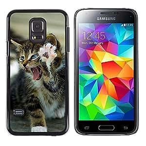 Caucho caso de Shell duro de la cubierta de accesorios de protección BY RAYDREAMMM - Samsung Galaxy S5 Mini, SM-G800, NOT S5 REGULAR! - Paw Kitten Fierce Roaring Lion Cat
