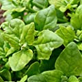 New Zealand Spinach Seeds, 100+ Premium Heirloom Seeds, Delicious & Fantastic Addition to Your Home Garden! (Isla's Garden Seeds), Non GMO, Survival Seeds, 85-90% Germination Rates, Highest Quality