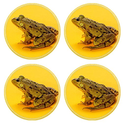 (Liili Round Coasters Non-Slip Natural Rubber Desk Pads Common Water Frog in front of an orange IMAGE ID 39421050)