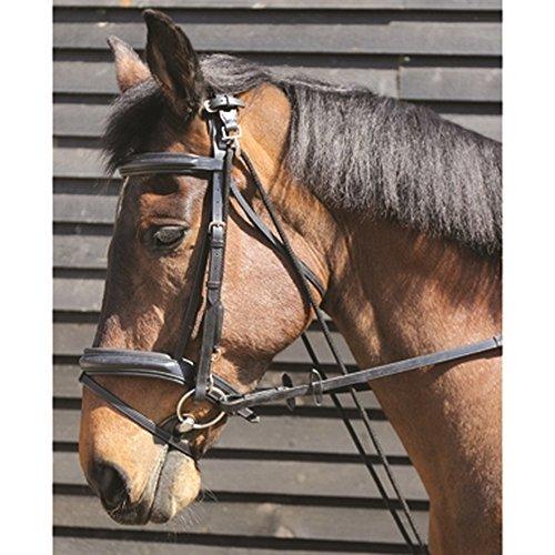 Bestselling Horse Longeing Equipment