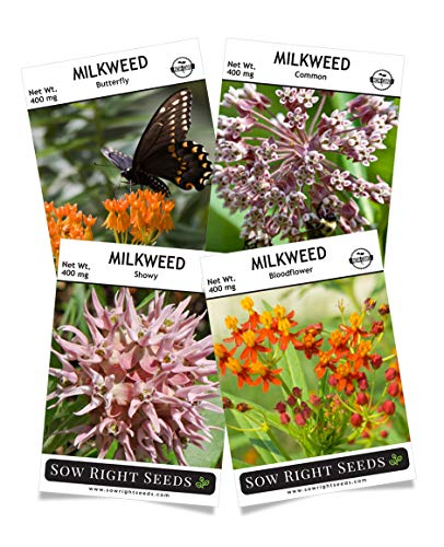 - Sow Right Seeds - Milkweed Seed Collection; Varieties Included: Butterfly, Common, Showy, and Bloodflower Milkweed, Attracts Monarch and Other Butterflies to Your Garden; Non-GMO Heirloom Seeds; Full