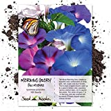 Seed Needs, Tall Mix Morning Glory (Ipomoea purpurea) 100 Seeds Untreated