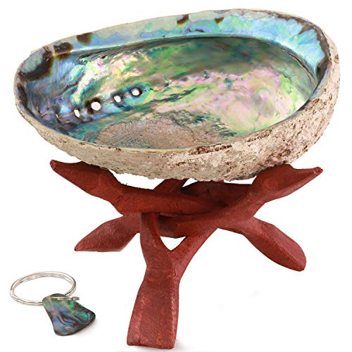 Ocean Shell Studios Premium Abalone Shell Extra Large 6- 7 with Wooden Stand, for Smudging, Cleansing Home, Meditation, Shell Crafts, Home D