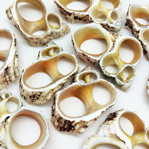 - PEPPERLONELY 10 PC Center Cut Gold Mouth Turbo Sea Shells, 1-1/2 Inch ~ 2 Inch