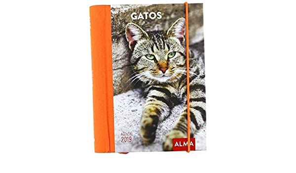 Agenda 2019. Gatos: Vv.Aa, Vv.Aa: Amazon.es: Oficina y papelería