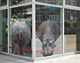 Window Sticker Hippo views window film window tattoo glass sticker window art window décor window decoration window picture Dimensions: 51.2 x 74 inches