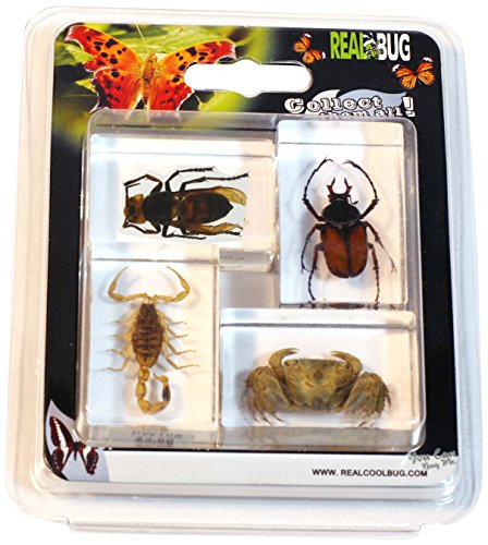- REALBUG 4 Pc Insect & Arachnid Paperweight Collection