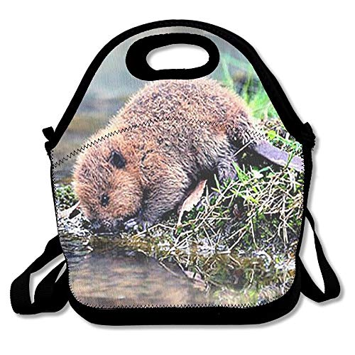 Lunch Tote Little Beaver Lunch Boxes Lunch Bags Handbag Food Storage Fits For School Travel Work Outdoor