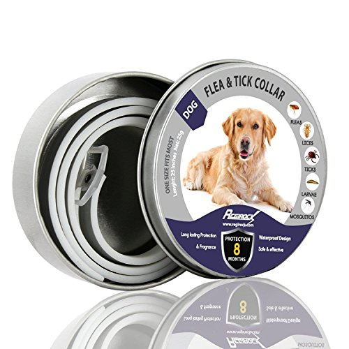 REGIROCK Flea and Tick Collar for Dogs - 8 Months Protection - Hypoallergenic, Adjustable & Waterproof Dog Collar - Flea Treatment Tick Prevention with Natural Essential Oil[Upgraded formula]